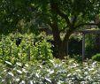 Japanischer Garten Hamburg Reizend Garten Hamburg Harburg Einmal Tabula Rasa & Wieder Neu
