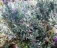 Japanischer Garten Ideen Einzigartig Pflanzenstützen Border Restraints Rust