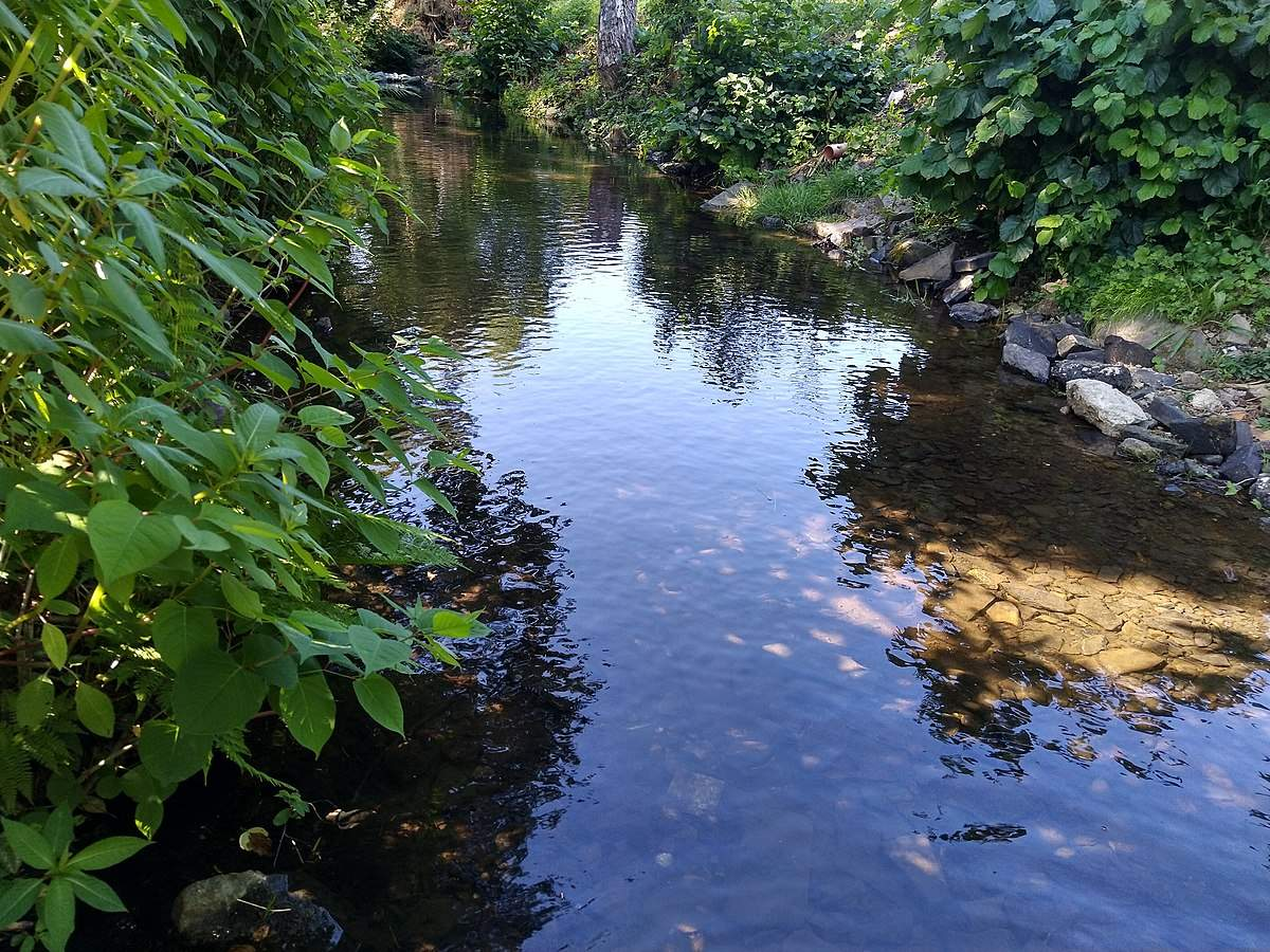 1200px Aubach im Sommer bei normalem Wasserstand