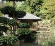 Kaiserslautern Japanischer Garten Reizend Die 619 Besten Bilder Von Kaiserslautern Gestern Und Heute