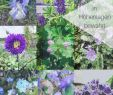 Kandelaber Garten Einzigartig 9 & Mehr Blaue Stauden – Blaues Wunder Im Garten Auf 850 Hm