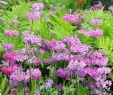 Kandelaber Garten Neu Chelsea Flower Show 2016 2017 the Morgan Stanley Gardens