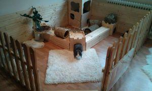 38 Genial Kaninchen Im Garten Frisch
