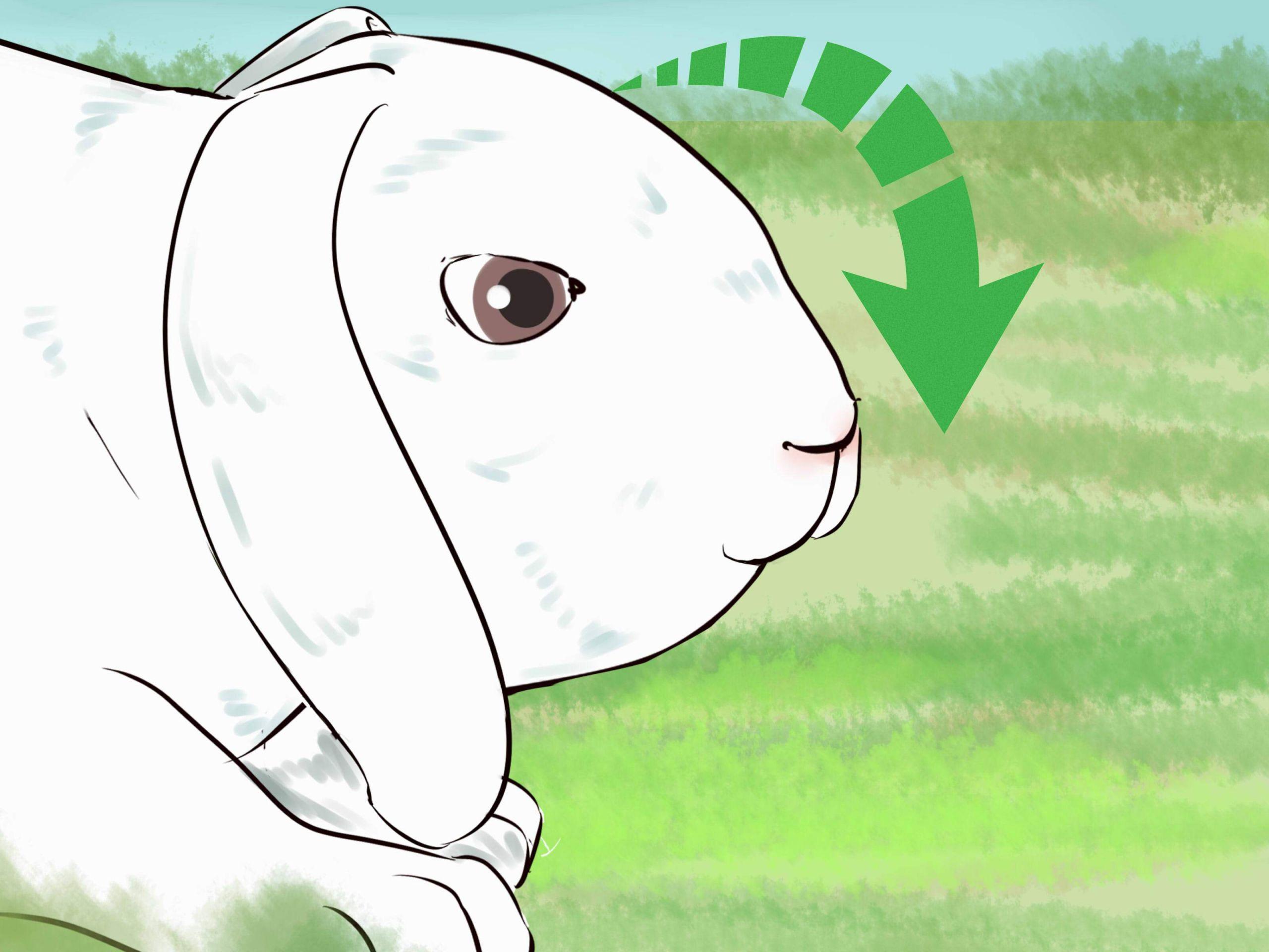 Catch a Pet Rabbit Step 26