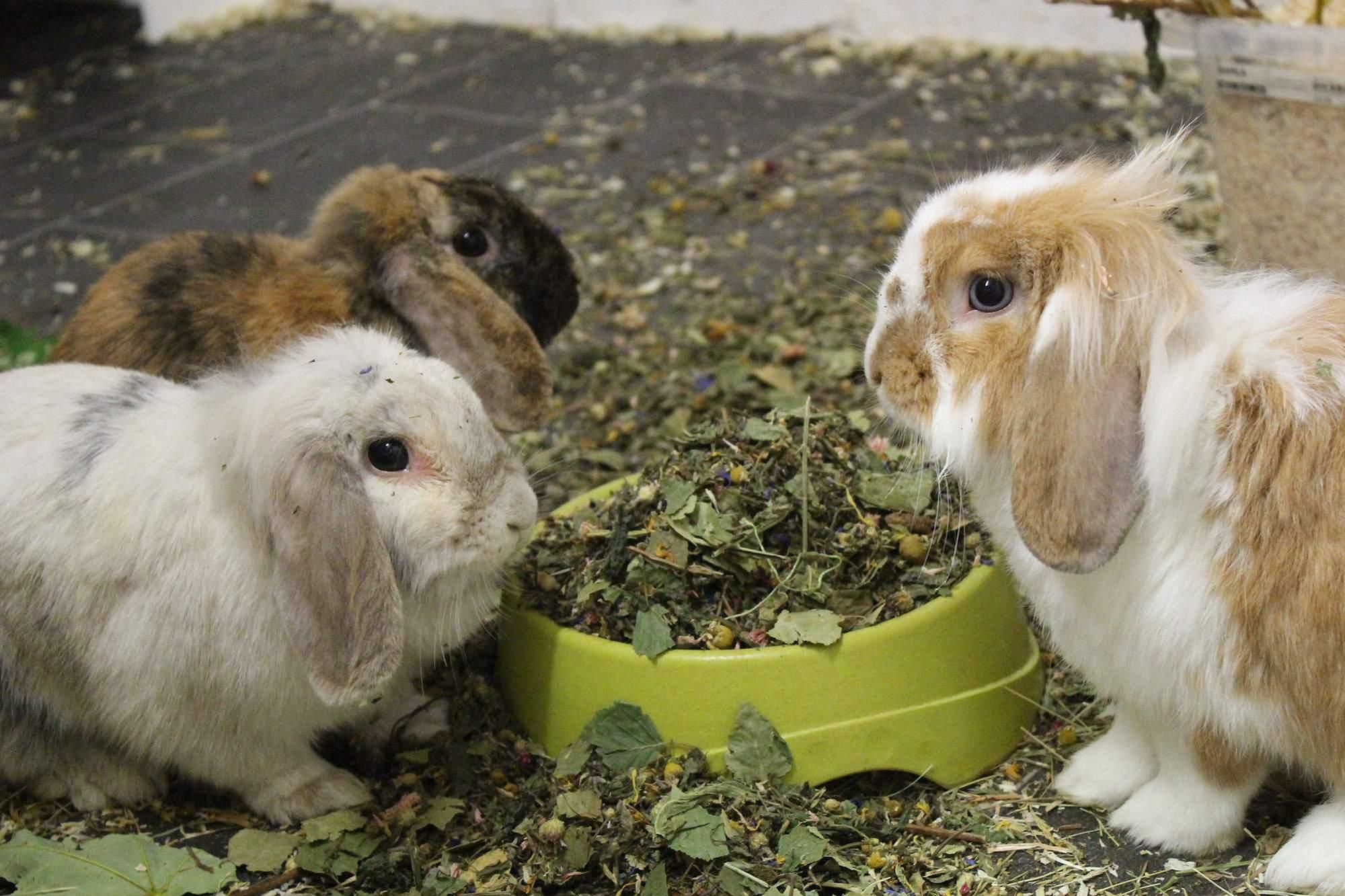 zoo futter hasen meerschweinchen kaninchen garten 0000