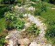 Katze Im Garten Begraben Inspirierend Hund Im Garten — Temobardz Home Blog