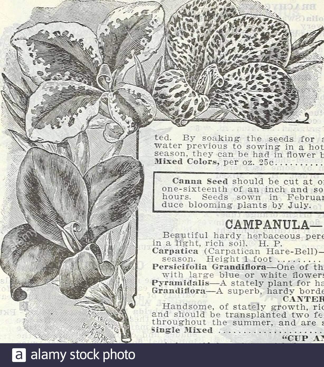 hof und garten jahrlich fruhjahr 1906 calendula prinz op orange 60 currie bruder co hof und garten jahrliche dbps canna grosse blute franzosisch schone pflanzen fur cen ters von grossen betten oder backribbons fur grenze als win ter bluhende pflanzen in potsthey sind auch von grossem wert das laub ist luxuriantand sind pflanzen zwerg bewohnen bluten sind ofimmense grosse und der sehr brillante farben rangingthrough alle grautone ofyellow zu den reichsten crim sohn scarlet und zinnoberrot viele sind wunderschon spot samen fur etwa zwolf stunden in warmsowing in eine brutstatte oder gewachshaus fruh in dir 2anc4ma