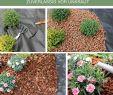 Kleine Pools Für Den Garten Neu Unkrautvlies Für Garten Hochbeet Gewächshaus 50g M² 1