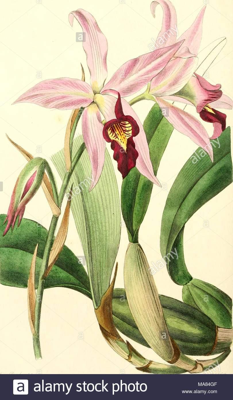 edwards botanische registrieren oder ornamentalen blumen garten und gebusch ylu stilt ta m pu iyj siuyurx7603 mtmi j fi ma84gf