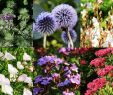 Kleiner Japanischer Garten Frisch Pflanzen Für Deinen Japangarten Jetzt Bestellen