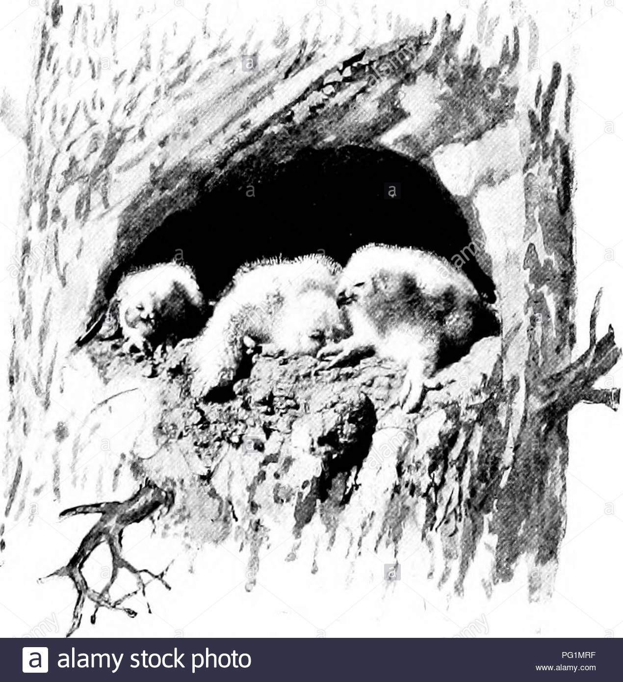 american natural history eine stiftung fur nutzliches wissen der hoheren tiere von nordamerika natural history great horned owl mit horner jaid zuruck im zorn 2 wachtel x grouse pinnated 1 taube 1 rampe 1 wildente 1 coopers hawk und 2 unbekannt sau iere gefunden wurden wie folgt 46 kot und ratten 32 kaninchen und hasen 7 spitzmause 5 squir rels 3 streifenhornchen 4 pocket gopher 2 stinktiere 1 weasel und 1 bat ausser frage steht wird der sollsaldo gegen ses vogels ist schwer und rechtfertigt seine zerstorung wo gefunden aber gleichzeitig es geht gegen das korn zu ki pg1mrf