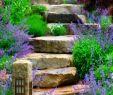 Kräuter Im Garten Genial 66 Primjera Vrtnih Stepenica U Modernom Vrtu