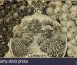 Kugellampen Für Den Garten Genial 99 Id Stockfotos & 99 Id Bilder Alamy
