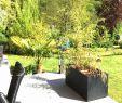 Kugelleuchten Garten solar Luxus Garten Diy