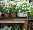 Landhaus Garten Blog Luxus Pin Von Famwo Auf Frühlingserwachen