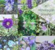 Landhaus Garten Blog Schön 9 & Mehr Blaue Stauden – Blaues Wunder Im Garten Auf 850 Hm