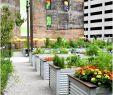 Laternen Für Den Garten Elegant Deko Für Große Fenster — Temobardz Home Blog