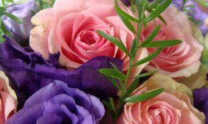 31 Das Beste Von Lisianthus Im Garten Luxus