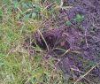 Löcher Im Garten Ratten Das Beste Von Arifs Gartenwelt • Rasen Bitte Hilfe Rasen Seite 2