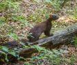 Löcher Im Garten Ratten Das Beste Von Marderbau Im Garten Erkennen