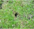 Löcher Im Garten Ratten Frisch Garten Bescheiden Rattenlöcher Im Garten Innerhalb Ratten
