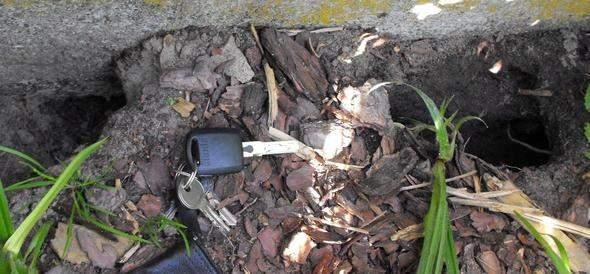 zeitgenossisch rattenlocher im garten mit locher rasen und gartenboden welches tier buddelt da