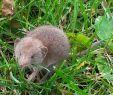 Löcher Im Garten Ratten Schön Tier Auf Meiner Veranda Tiere Garten