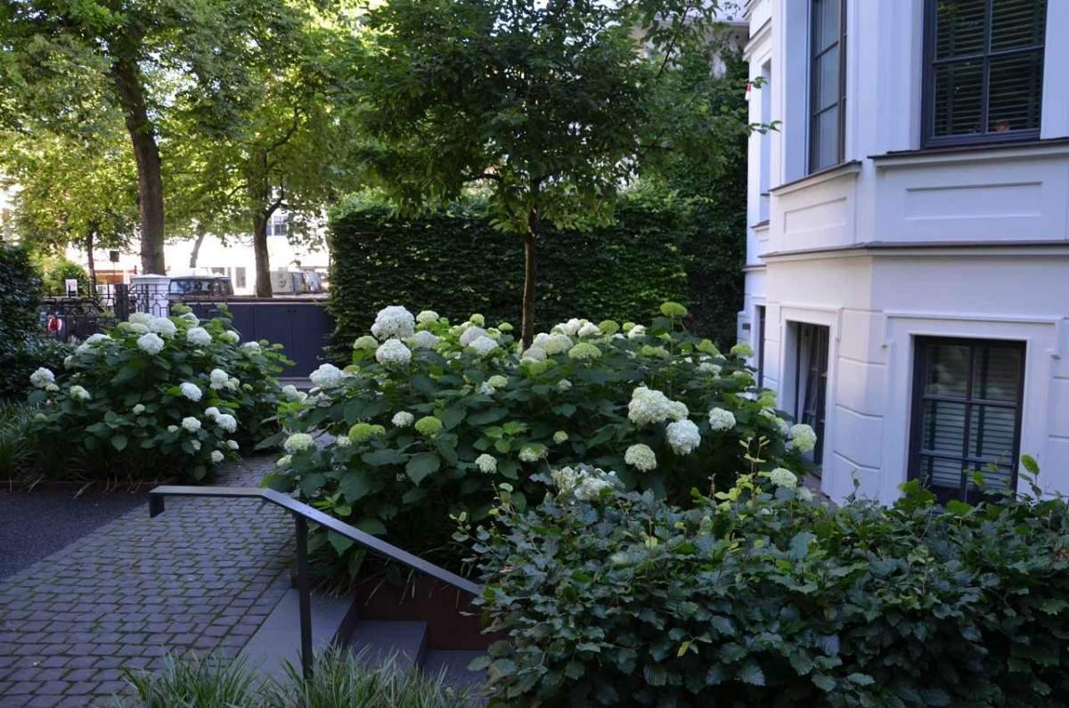 Garten von Ehren Vorgarten C Malus 1200x1200