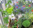 Luxus Garten Genial Garten Pflanzen Sichtschutz — Temobardz Home Blog