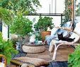 Madeira Botanischer Garten Das Beste Von 27 Luxus Garten Büsche Schön