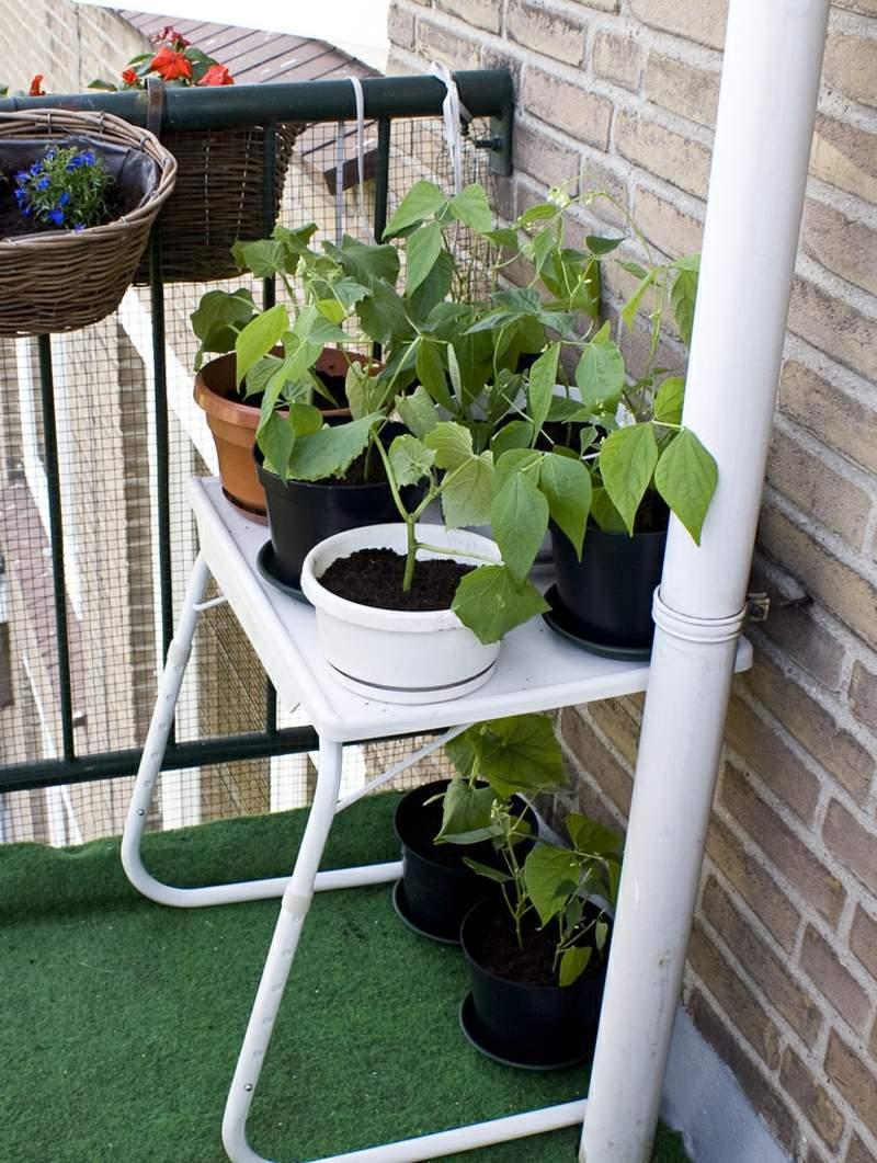 garten busche neu sadzenie balkonu 60 oryginalnych pomysac282c2b3w of garten busche