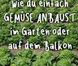 Mais Im Garten Luxus Die 176 Besten Bilder Von Gemüse Anbauen Im Eigenen Garten