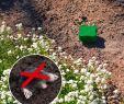 Marder Vertreiben Garten Frisch Maulwurf Ameisen Abwehr Vibration