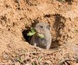 Maulwurf Im Garten Loswerden Elegant Die 323 Besten Bilder Von Animals