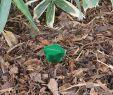 Maulwurf Im Garten Loswerden Elegant Maulwurf Ameisen Abwehr Vibration