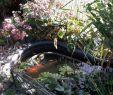 Maulwurf Im Garten Loswerden Genial Pin Von Maria Michels Auf Marias Garten