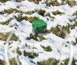Maulwurf Im Garten Loswerden Neu Maulwurf Ameisen Abwehr Vibration