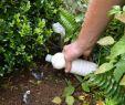 Mäuse Im Garten Bekämpfen Das Beste Von Wühlmäuse Natürlich Bekämpfen
