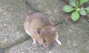 37 Genial Mäuse Im Garten Bekämpfen Einzigartig