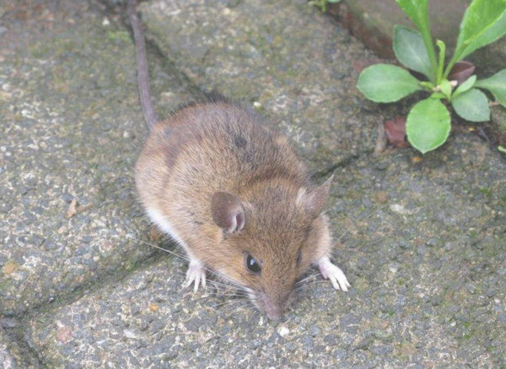 Mäuse Im Garten Bekämpfen Elegant Mäuseplage Im Garten Genial Beste Mäuseplage Im Garten