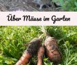 Mäuse Im Garten Bekämpfen Neu Über Mäuse Im Garten Altes Gartenwissen