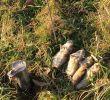 Mäusebekämpfung Im Garten Elegant Mäusebekämpfung In Der Landwirtschaft Im Obst Und Garten