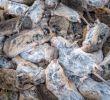 Mäusebekämpfung Im Garten Frisch Mäusebekämpfung In Der Landwirtschaft Im Obst Und Garten