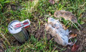 26 Reizend Mäusebekämpfung Im Garten Inspirierend