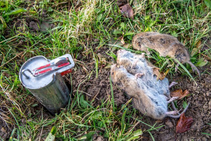 Mäusebekämpfung Im Garten Genial Mäusebekämpfung Im Garten M Usebek Mpfung In Der
