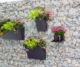 Mein Schöner Garten Fotos Reizend Hashtag Pflanzbehälter Na Twitteru