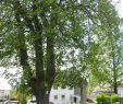 Memoriam Garten Neu Kist the Reader Wiki Reader View Of