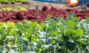 40 Neu Mischkultur Im Garten Inspirierend