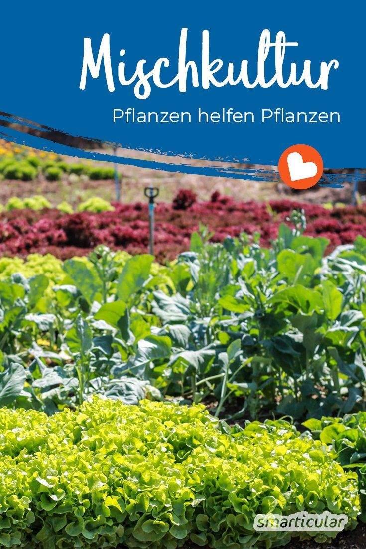 Mischkultur Im Garten Luxus Gärtnern Ohne Chemie Dank Mischkultur