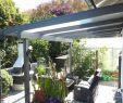 Moderner Sichtschutz Für Garten Elegant Sichtschutz Pflanzen Immergrün — Temobardz Home Blog